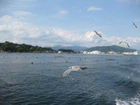 Посольство РФ в КНДР проверяет информацию о захвате российской яхты в Японском море